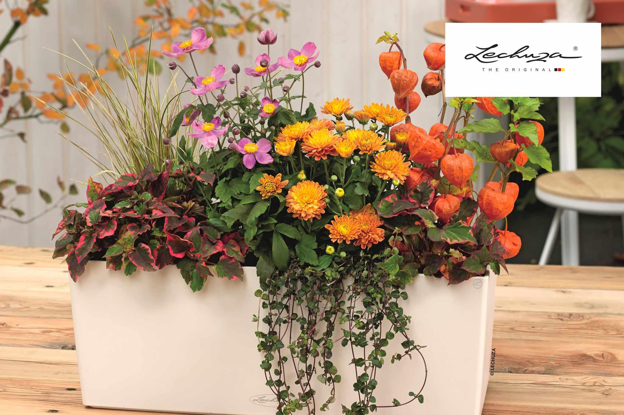 Win a self-watering planter by Lechuza - BBC Gardeners' World Magazine
