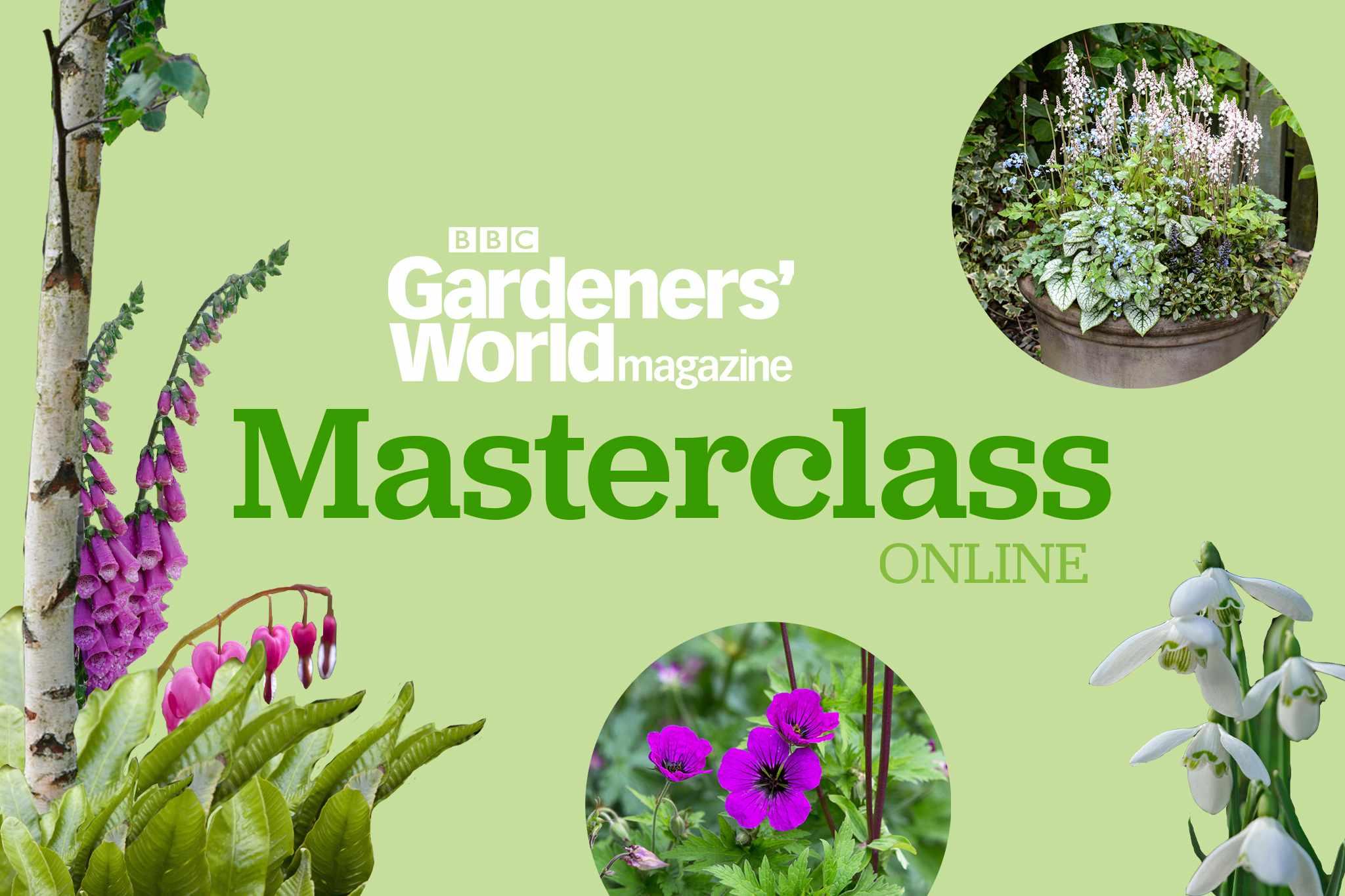 Masterclass Online: Gardening in Shade