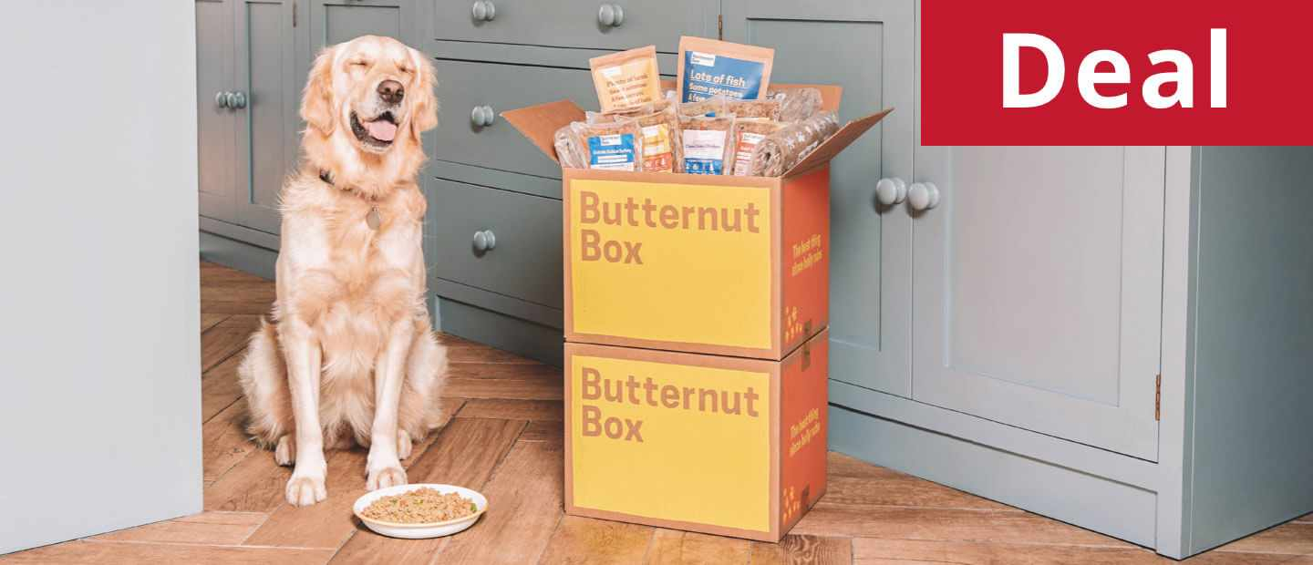 Butternut Box and dog