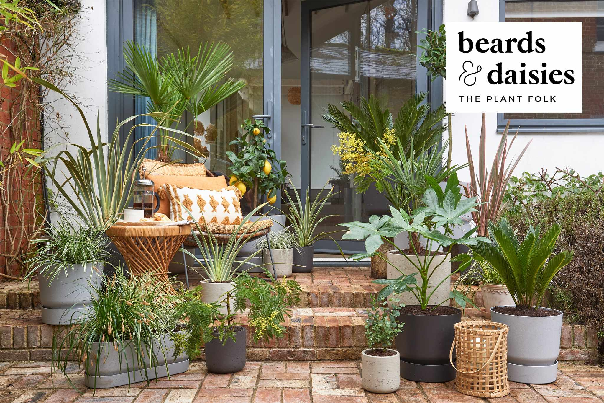 Win a £350 Beards and Daisies voucher