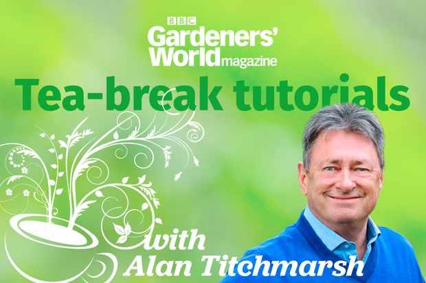 Tea-break tutorials with Alan Titchmarsh