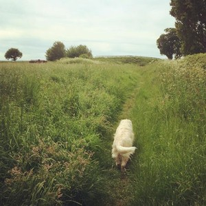 Dog walking boosts health and wellbeing