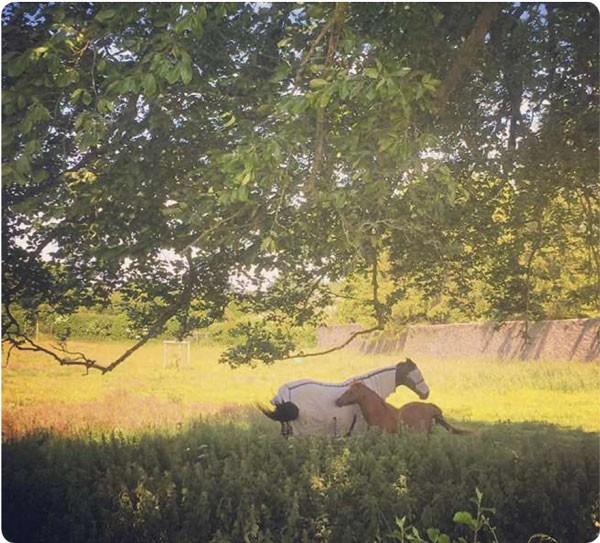 Photowalk horses