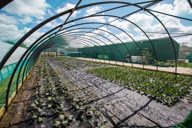 The Clink Gardens at HMP Send Surrey