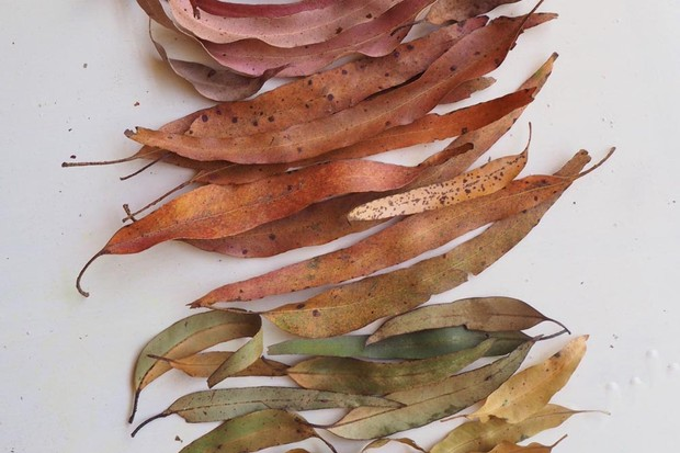 Rainforest leaves sorted by colour