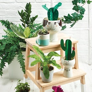 Paper cacti designed by Matilda Smith