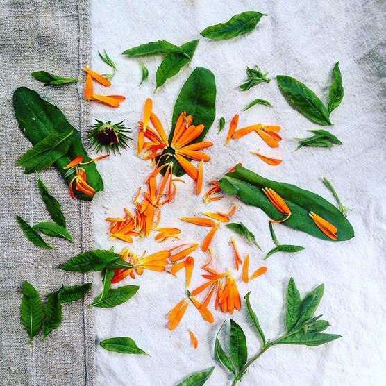 Calendula and lemon verbena garden foraged detox tea