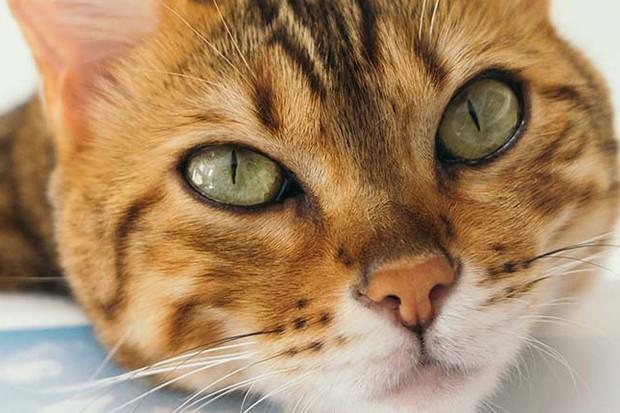 Cute cat's face
