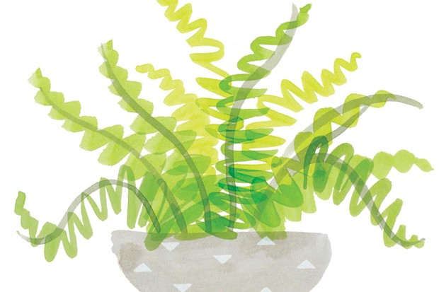 Foilage illustration by Holly McCulloch
