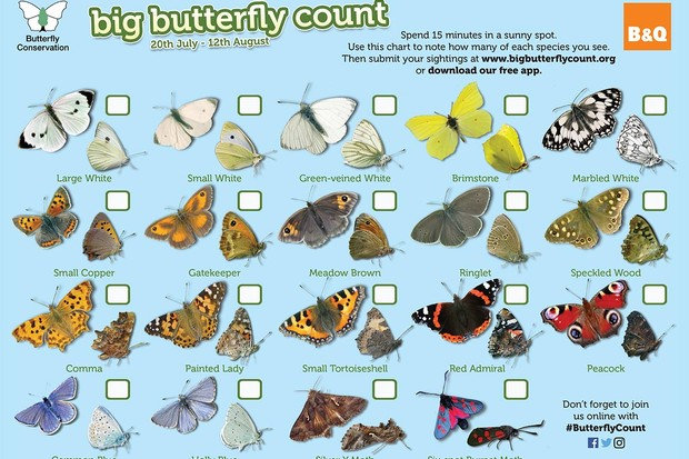 99999 Butterly Conservation Chart Artwork 2018.indd