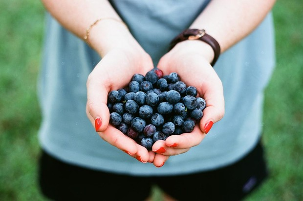 Grow your own blueberries