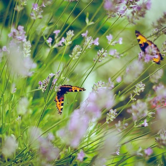 butterfly-garden-emiel-molenaar-186243-unsplash