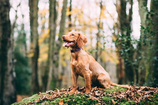 Dog in the woods in the autumn
