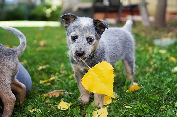 Puppy holding a leaf
