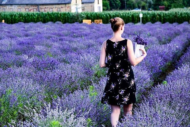 Woman walking in a lavender field