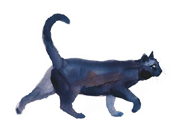 Black cat watercolour illustration