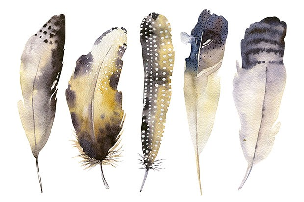 Illustrated watercolour feather illustration from The Witchcraft Handbook