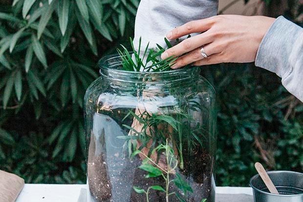 Christine Liu's terrarium step 3