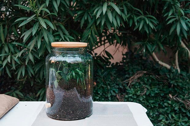 Christine Liu's terrarium step 4
