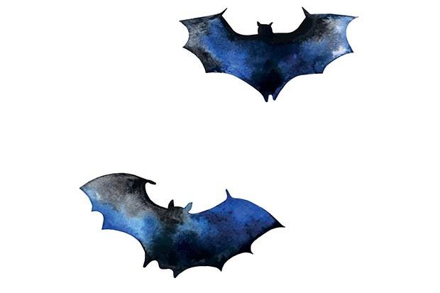 Watercolour bats illustration