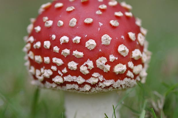 Close up photo of a toadstool by Tracey Calder