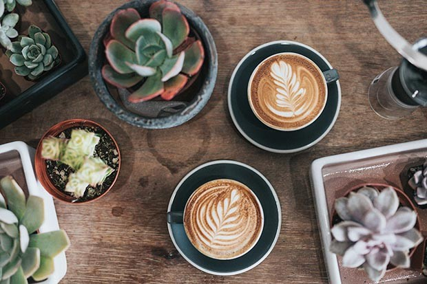 Barista coffee and plants