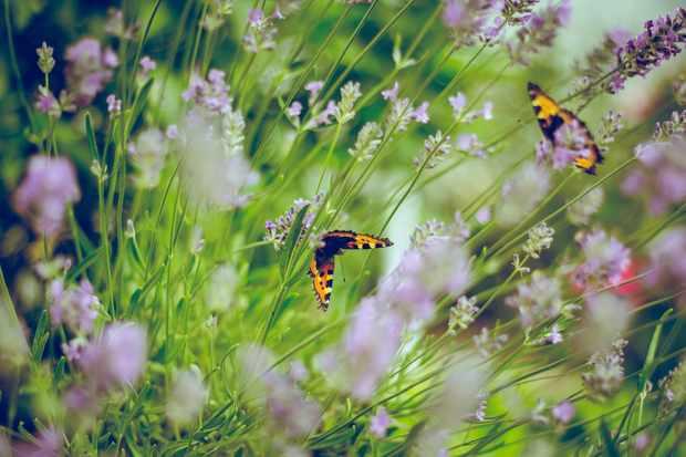 Spring garden with butterflies