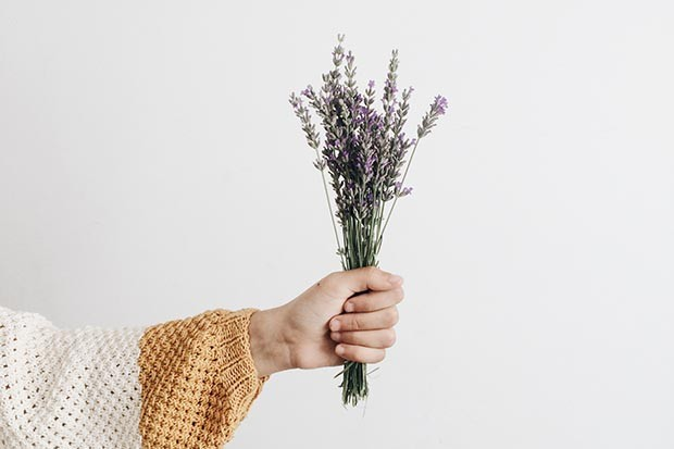 Hand holding a bunch of lavender