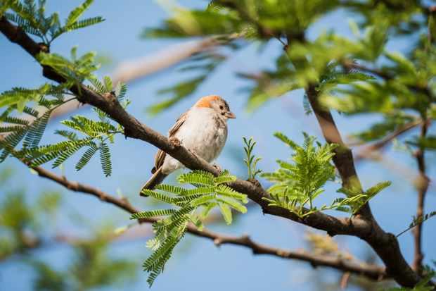Bird on spring branch