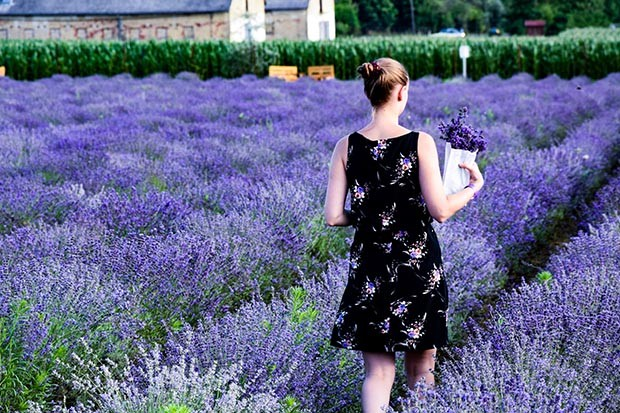 Woman walking through lavender fields