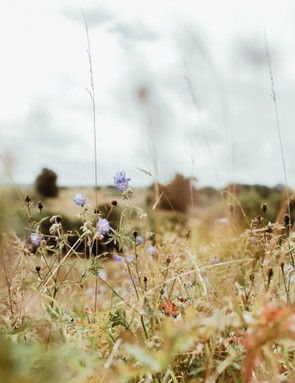 A hazy field, by Rachael Smith / Our Beautiful Adventure