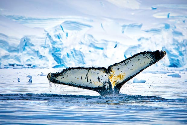 A whale's fluke