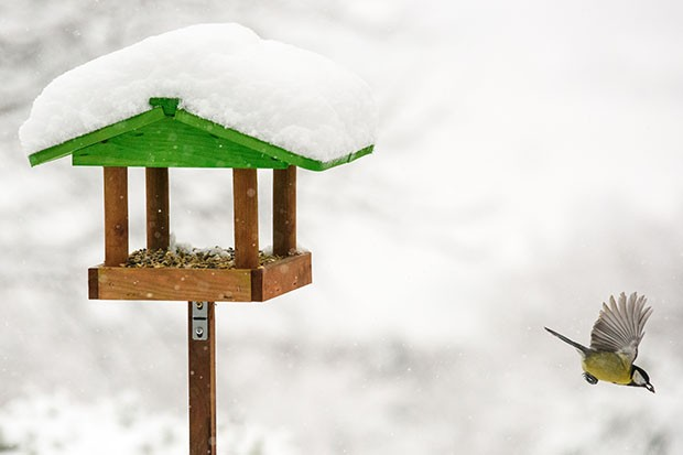 Bird feeder covered in snow