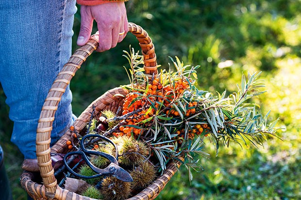Food Forager With Her Basket of Foraged Food