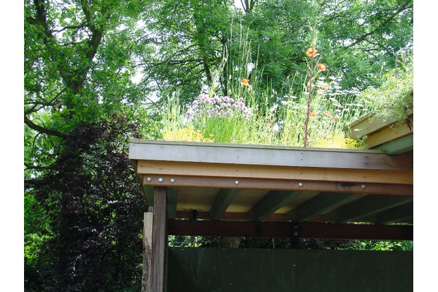 A flat roof on an extension has been planted with herbs and wildflowers to attract wildlife