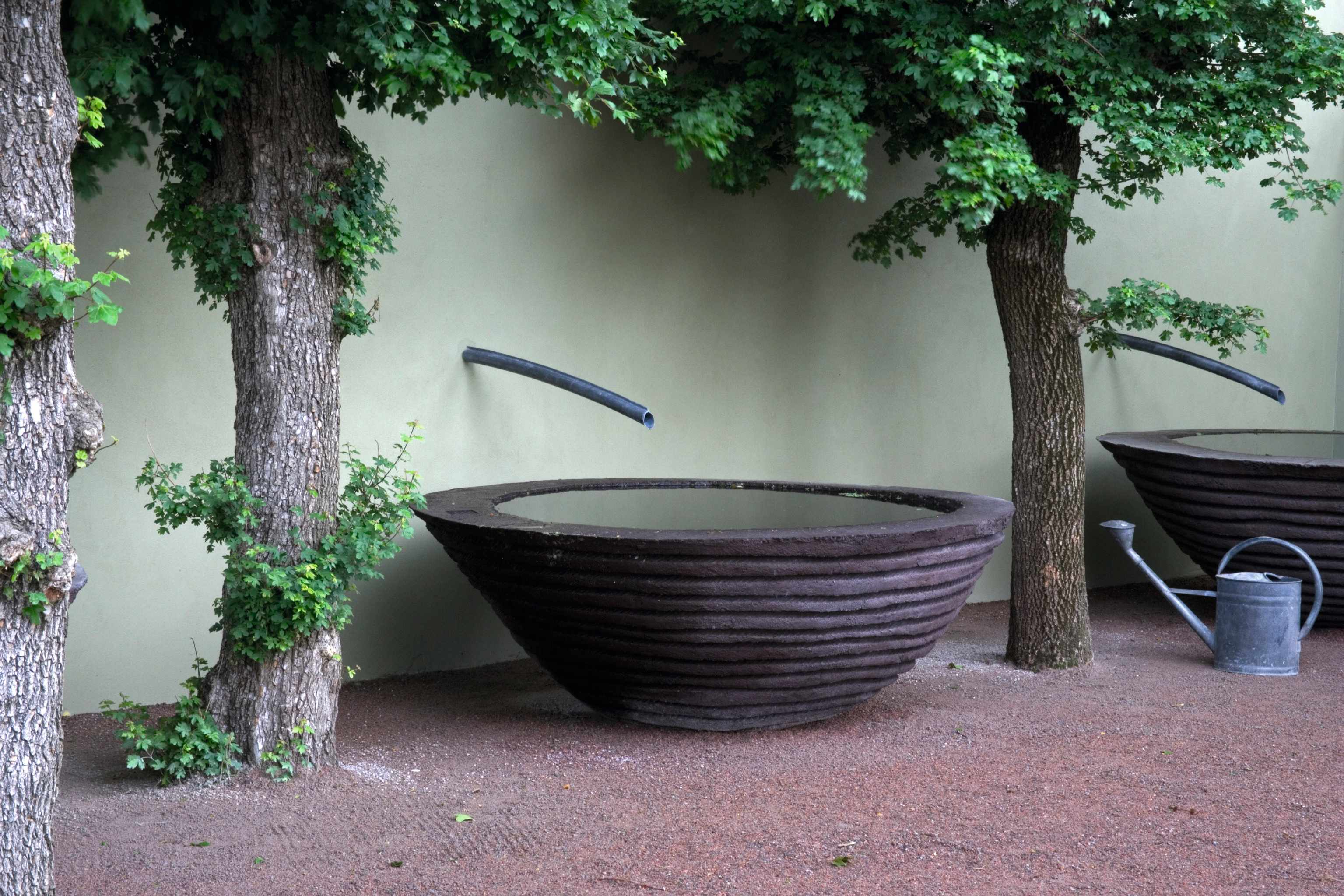 Large sculpted concrete rain water vessels and pollarded Acer Campestre
