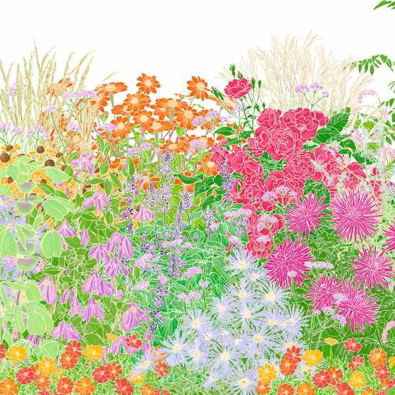 An illustration showing the plants used in a bold design for a late summer border by gardener Andrea Brusendorf