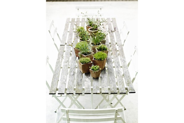 A group of plants arranged in clay pots line a white wooden bistro table with chairs