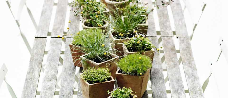 Planting ideas for summer containers