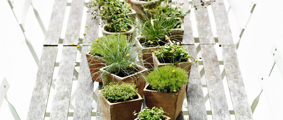 Planting Ideas For Summer Containers Gardens Illustrated