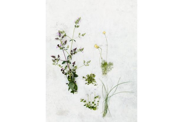 Origanum laevigatum 'Hopleys', Mentha requienii, Cotula hispida, Festuca glauca and Pratia pedunculata