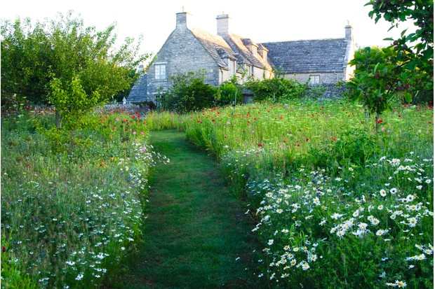 A mown path leading up to a house through a grassy meadow that has been left to grow long and has been planted with wildflowers