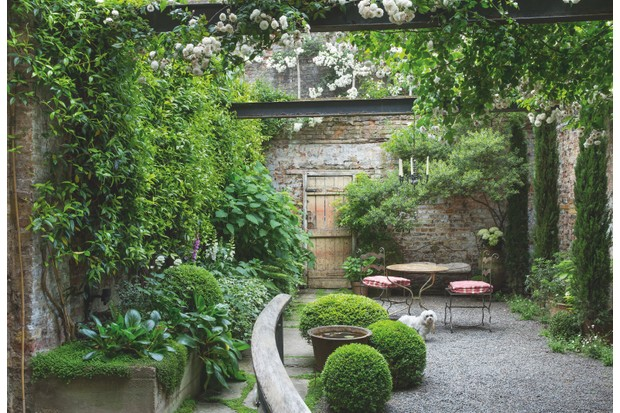 Shady courtyard garden, clipped box balls around bird bath, table and chairs on gravel terrace, wooden gate