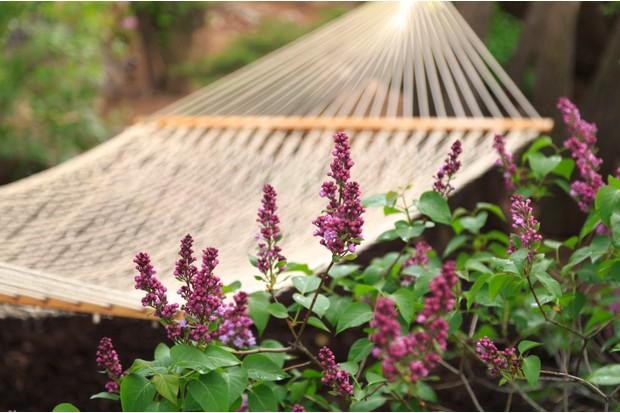 Lilacs and hammock in backyard garden