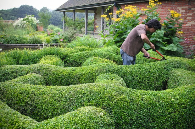 Gardener clips a sculptural topiary hedge with shears