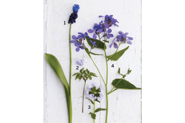 Four early spring plants for container planting