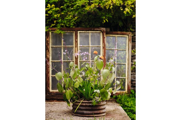 Kirsty Ramage late season container display