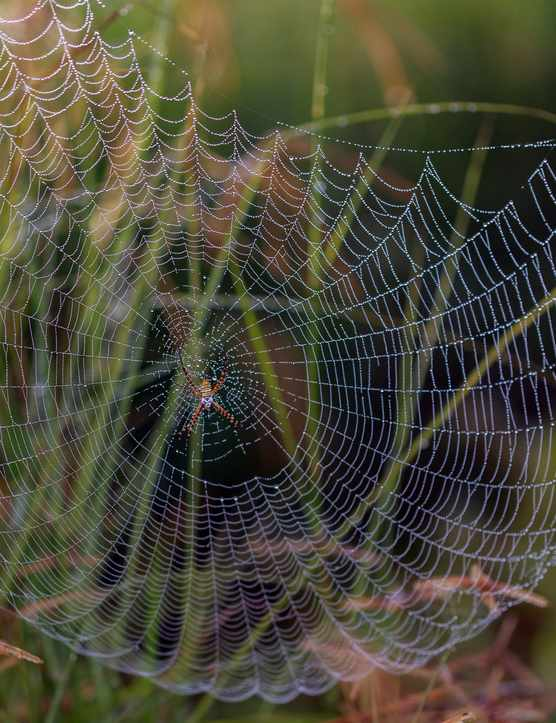 Spiderweb in mist. Photo: Getty Images