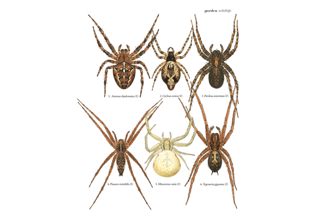 Some of the most common garden spiders