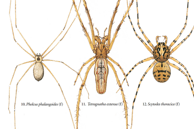 Most common spiders spotted in the garden